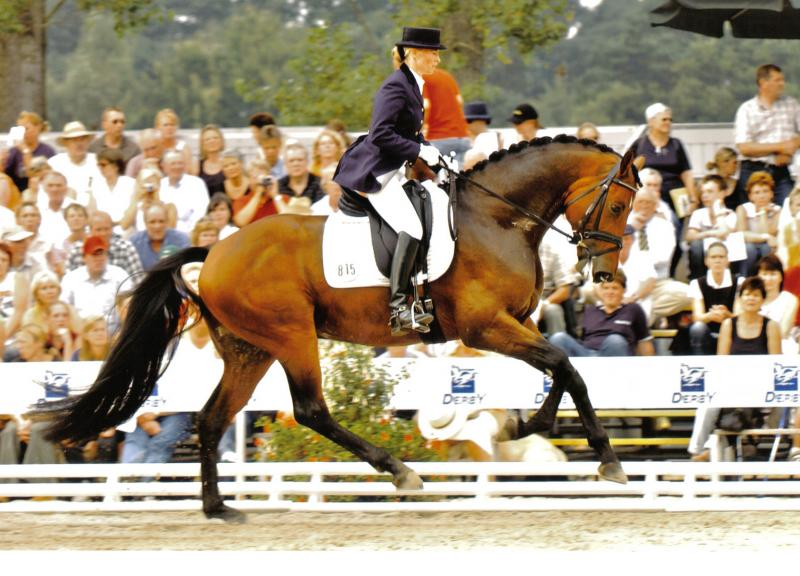 Robespierrot  at the Bundeschampionate Warendorf - 4 Years galop